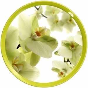 Tác plastový průměr 35cm IML#orchidej